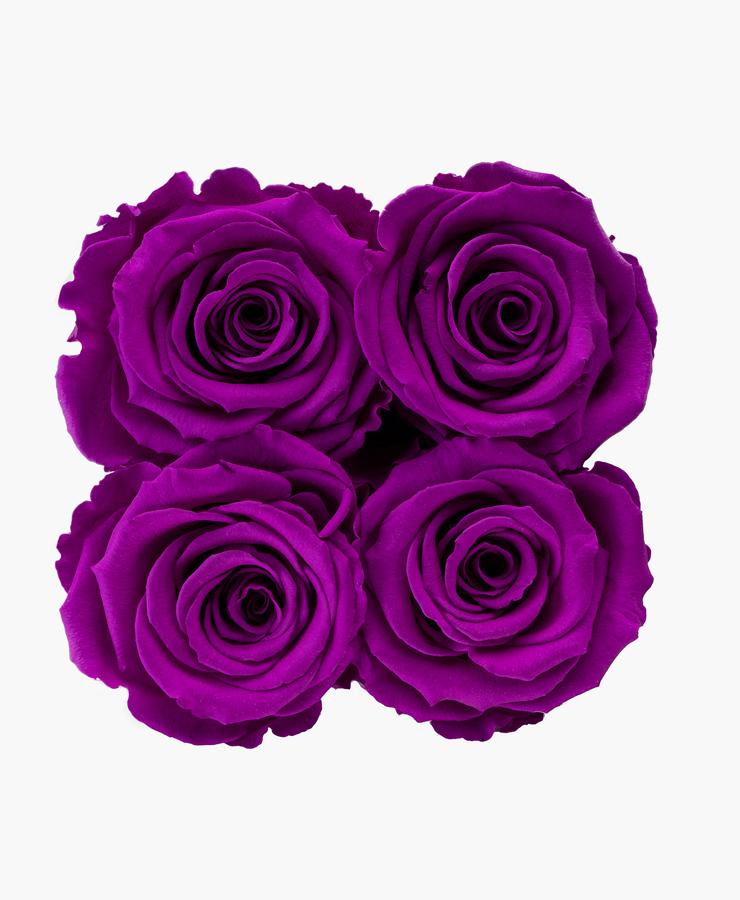 ivoryi-friends-ivoryiflowerbox-infintiy-electric-purple-top-grace