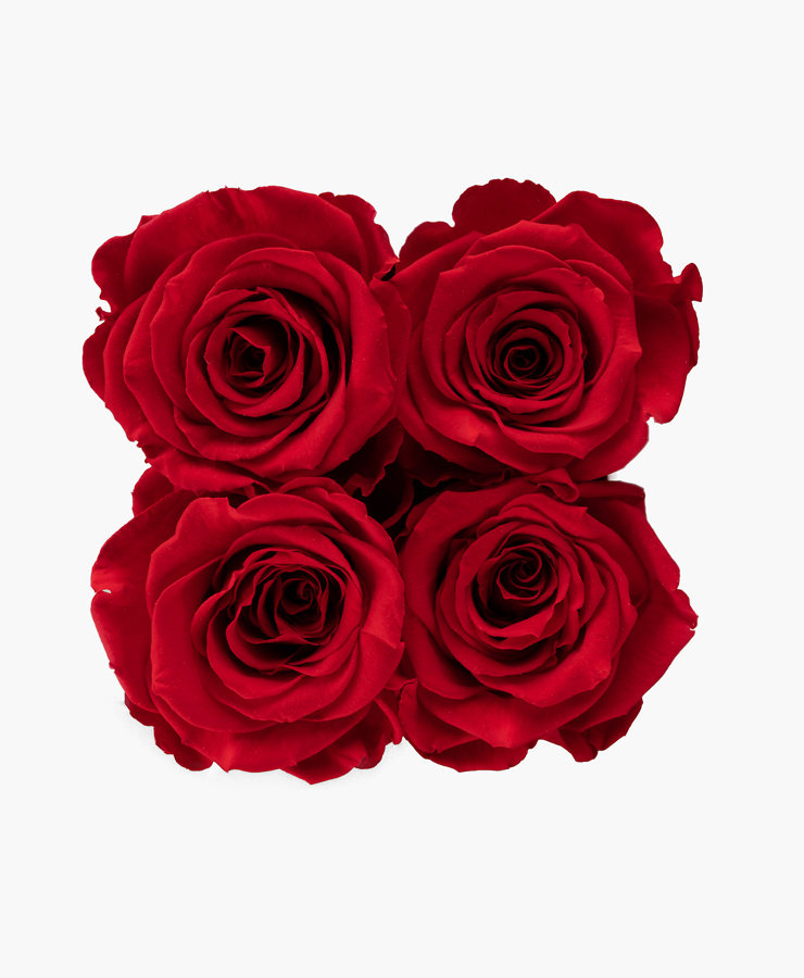 ivoryi-friends-ivoryiflowerbox-infintiy-romantic-red-top-grace